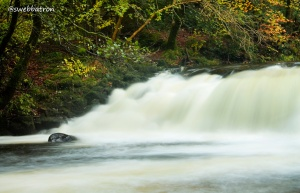 The Salmon Leap