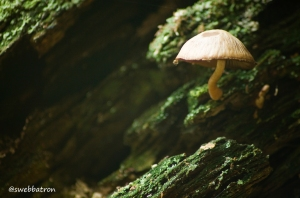 Lettaford Mushroom