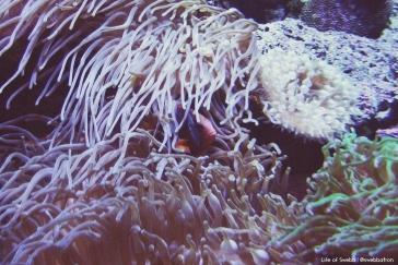 A fish at Sydney Aquarium