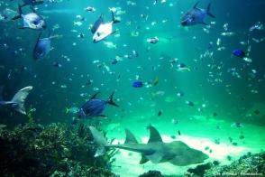 A big tank of fish at Sydney Aquarium