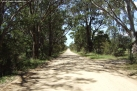 A back road leading to a small country zoo, Hunter Valley