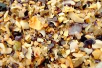Shells on Shelly Beach