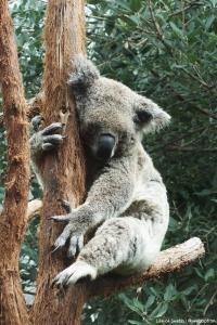 Sydney Wildlife World